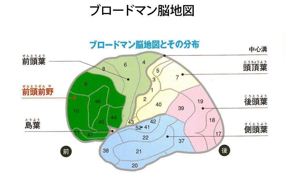 ブロードマン脳地図