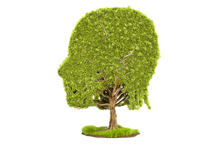 Human head shaped tree, 3D rendering isolated on white background