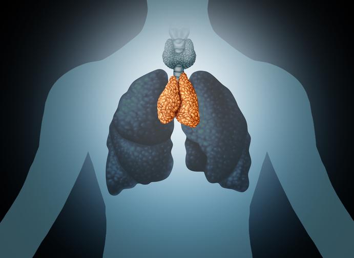 Thymus Human Organ