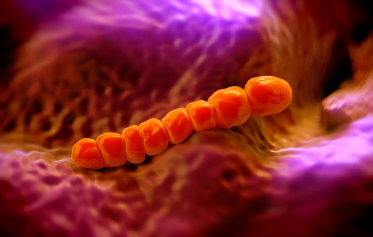 Streptococcus pneumoniae, or pneumococcus