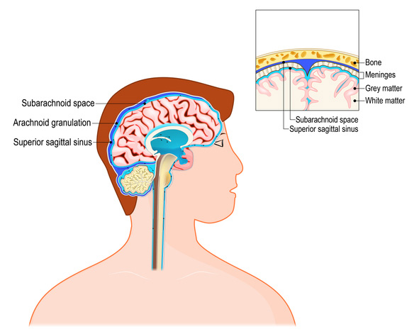 Cerebrospinal fluid (CSF) is a clear fluid in the brain and spinal cord.