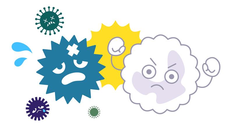 Leukocytes killing bacteria