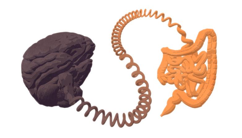 Gut–brain axis. The gut-brain connection.