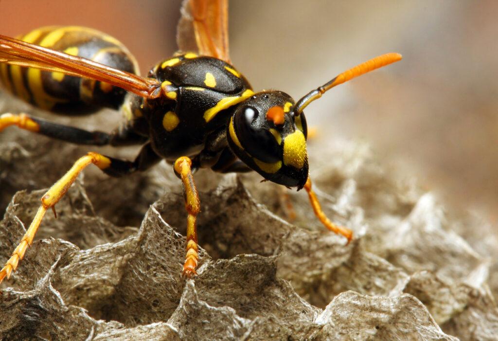 蜂に刺されたら?アナフィラキシーショックへの対処方法を専門医が解説